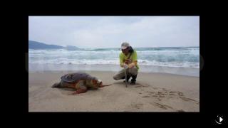 兩隻死龜無言的抗議 淨灘周年他悲從中來
