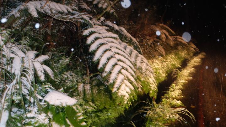 寒流來襲全台極凍,新北市平溪區五分山23日11點40分左右開始飄雪。記者張芮瑜/攝影