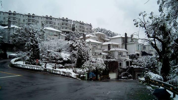 新店大台北華城今天披上雪衣,有如雪國世界。記者王彩鸝/攝影