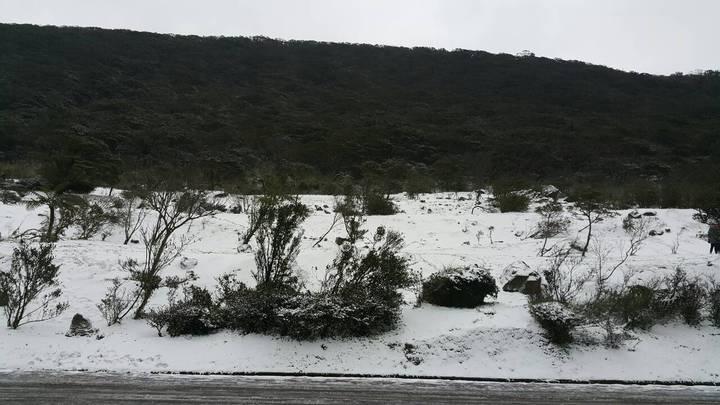 陽明山二子坪今天下起大雪,草地上滿滿積雪。記者王宣晴/民眾提供