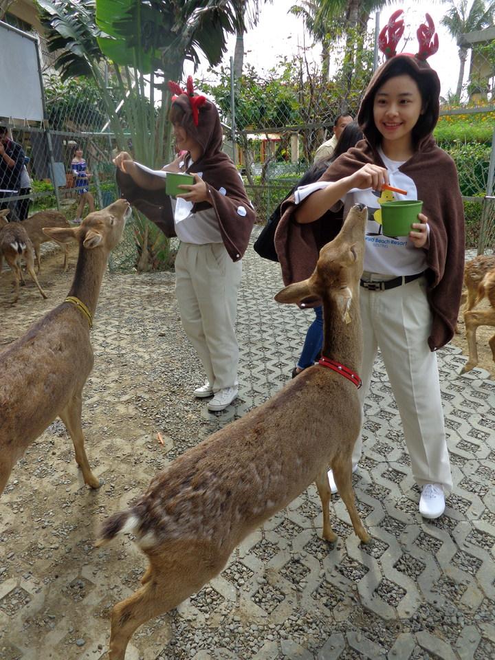 墾丁福華度假飯店和「 鹿境」合作打造梅花鹿園區,人與鹿可以零距離互動。記者潘欣中/攝影