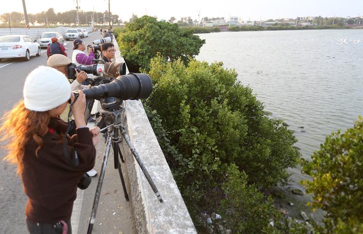 高雄茄萣濕地是南台灣知名的黑面琵鷺棲息地,吸引鳥友前往賞鳥。圖/本報資料照片