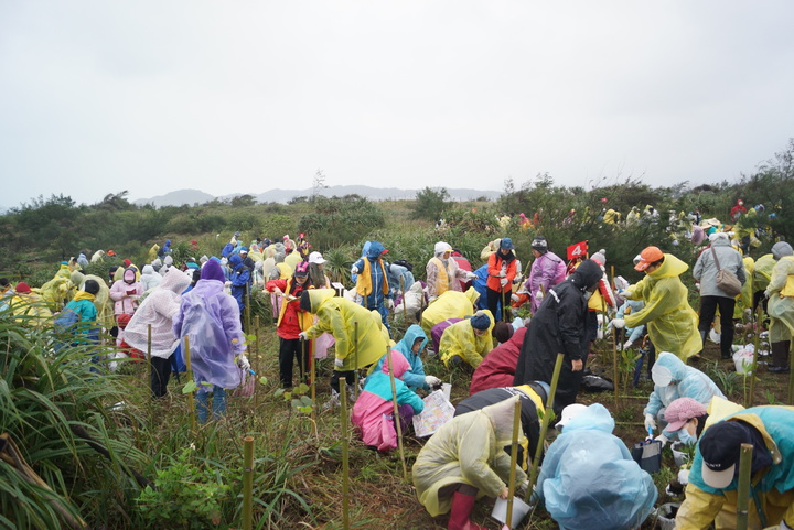 新北市農業局今天早上在金山區中角沙珠灣舉辦「植樹節 新北市海岸造林計畫」,共有500多人到場參與,總計種下1000株濱海樹苗。記者曾健祐/攝影