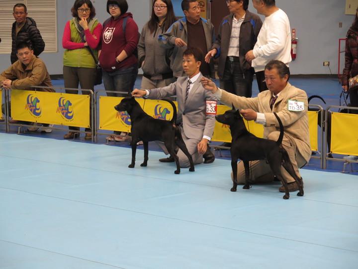 狗狗的臉部五官、體格、動態等都是評分標準。記者徐庭揚/攝影