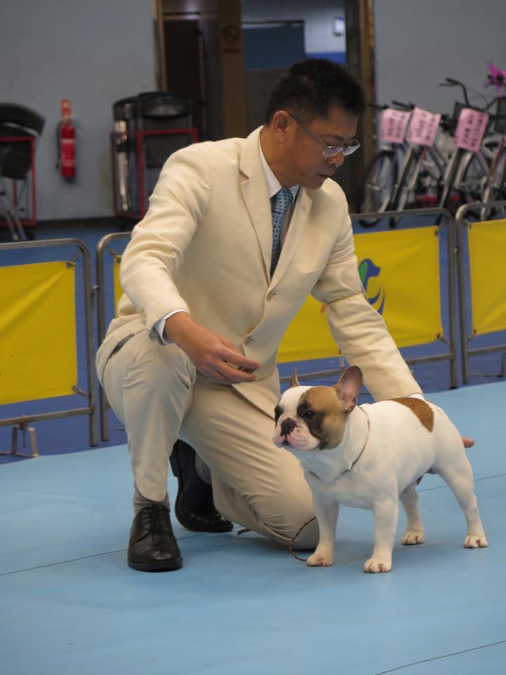 全台近百隻寵物犬、護衛犬齊聚在花蓮,透過競技交流。記者徐庭揚/攝影