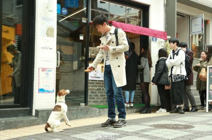 胡歌在韓國拍廣告,與小狗對戲畫面趣味。 圖/摘自微博
