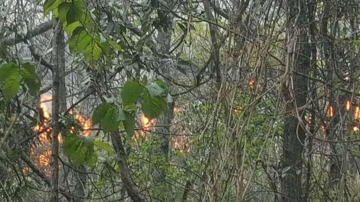 台中市森林大火,火勢延燒到武陵農場茶莊茶園東側外圍,雖然未燒到茶園,員工仍闢防火巷,希望6公頃茶園不受祝融波及。圖/武陵農場提供