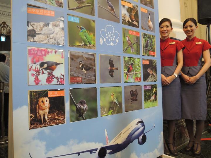 華航將引進14架A350客機,今年7月起交機,並結合具台灣特色的鳥類,首創以「台灣飛行大使」系列命名,第一架與第二架 A350分別命名為「帝雉號」與「台灣藍鵲號」;其他 12 架新機的名稱則邀請民眾上網票選,共有24種鳥類可供票選。記者邱瓊平/攝影