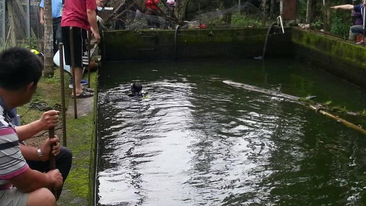 魚池鄉民眾釣魚疑似失足落水,南投消大派潛水人員進行打撈,圖/南投縣消防局提供