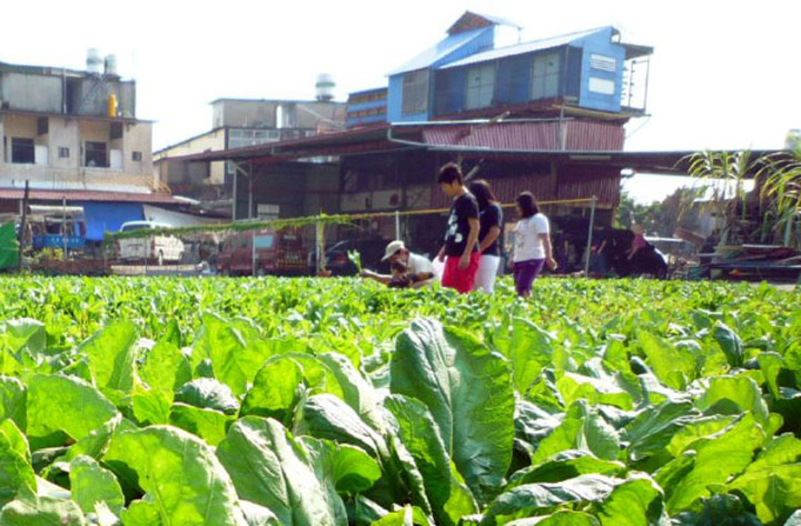 高雄市社會局闢建銀髮族市民農園,開放65歲以上市籍長輩耕種。圖/高雄市府提供
