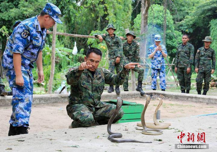 泰國陸戰隊士官演練「舞弄」眼鏡蛇。(中新網)