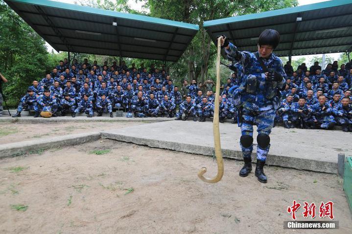 中共解放軍陸戰隊女隊員示範如何抓眼鏡蛇。(中新網)