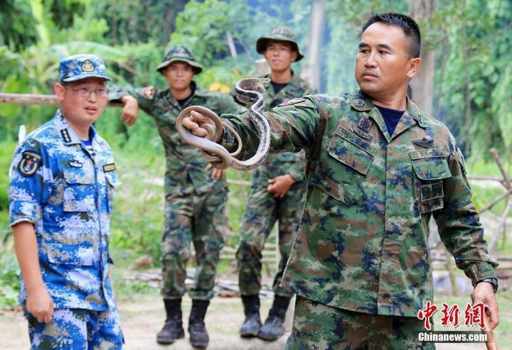 泰國陸戰隊士官演練如何抓眼鏡蛇。(中新網)