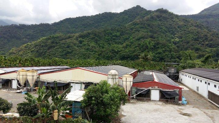 禽舍建置太陽能板  補照收租好處多