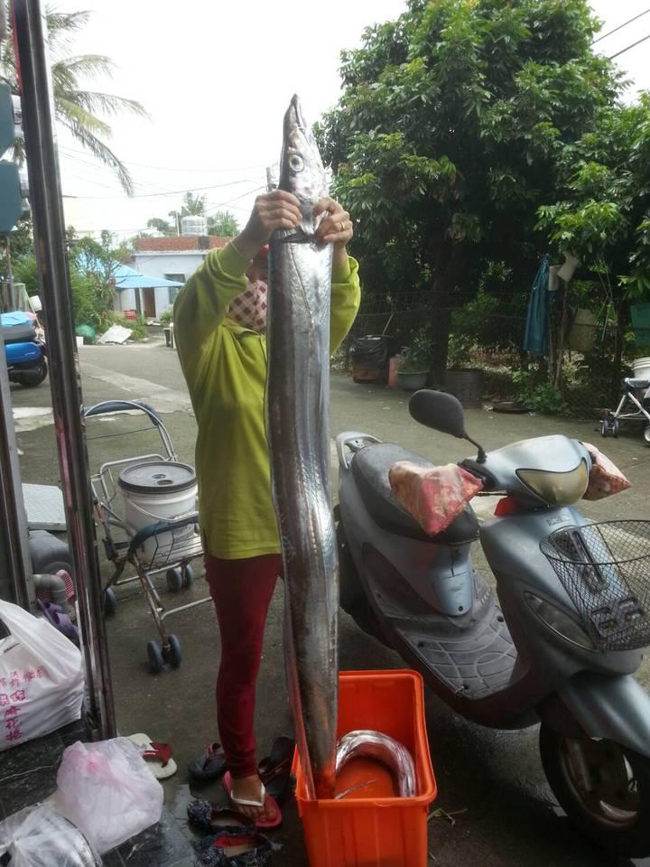 琉球漁民又釣到一隻重達5公斤的白帶魚,是近期最大尾。圖/琉球區漁會提供