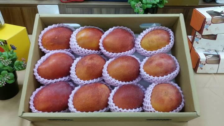 每到芒果產季,就有有心人在網路上放話芒果用違法生長劑,藉以打擊產業,讓農委會不堪其擾。記者彭宣雅/攝影