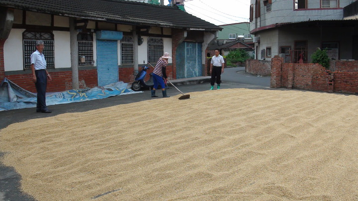 王崑成(左一)栽種自然米義賣為老人食堂籌款,不少村民主動幫忙。記者謝恩得/攝影