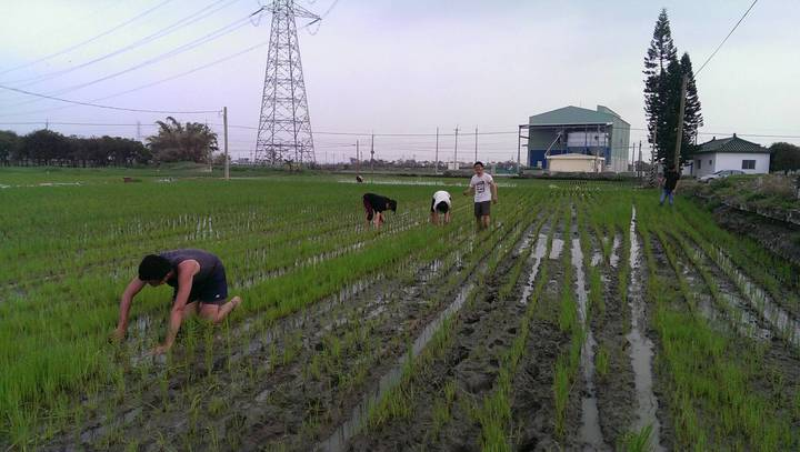 農忙期間曾有大學生主動提計畫打工換宿,下田除草。照片王崑成提供