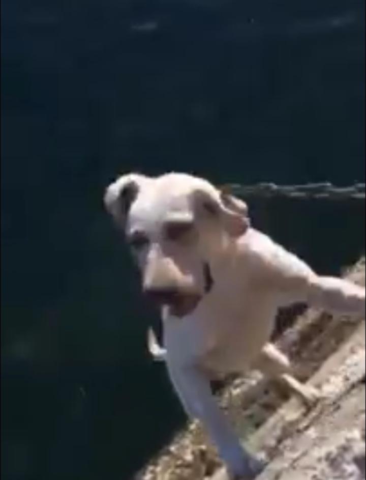 國軍又爆虐狗事件,今天上午一則影片被上傳到YouTube,一隻小狗被吊在港邊痛苦掙扎,上傳影片直指是陸戰隊憲兵所為。翻攝畫面