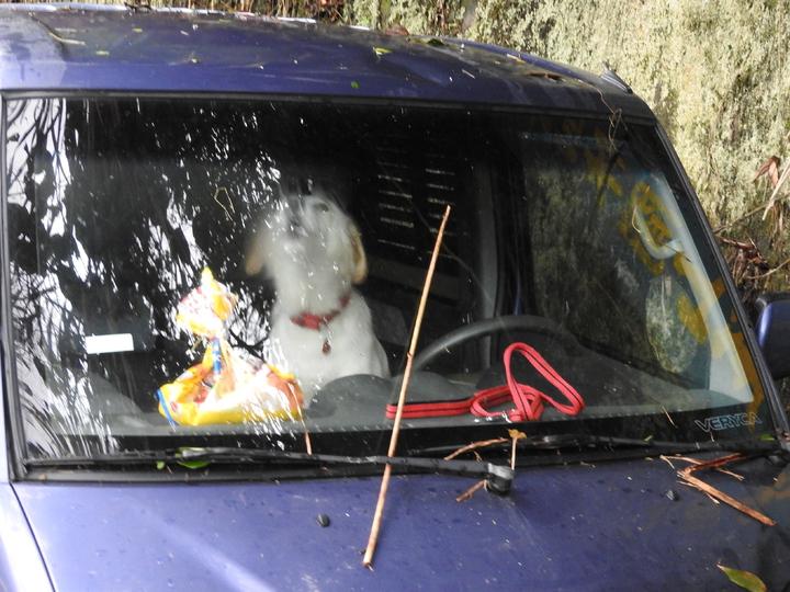 台鐵爆炸案林嫌在車上還養了隻狗,離開前還託附近婦人定期餵養。記者賴香珊/攝影