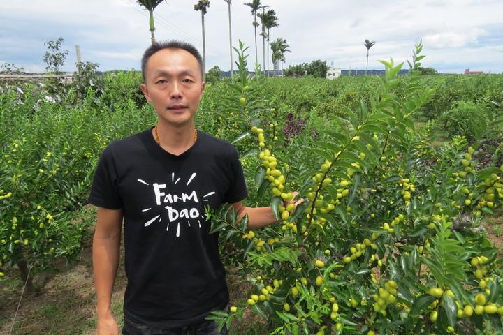 農委會百大青農邱俊閔種無毒紅棗有成績,贏得父親的信任。記者范榮達/攝影
