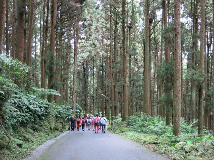 「第一屆溪頭森林路跑」活動,將在擁有全台最棒的芬多精及負離子的溪頭山林裡舉行。記者黑中亮/攝影