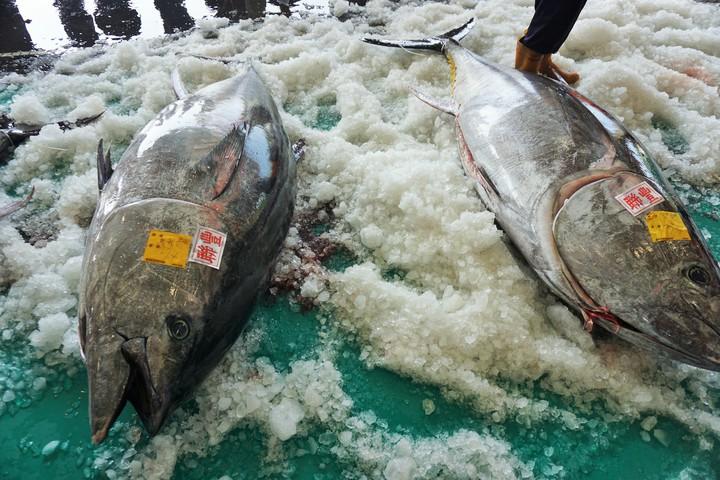 太平島漁場範圍縮限,宜蘭縣蘇澳地區漁民擔憂演變成南北部漁民爭漁場的窘境。記者吳佩旻/攝影