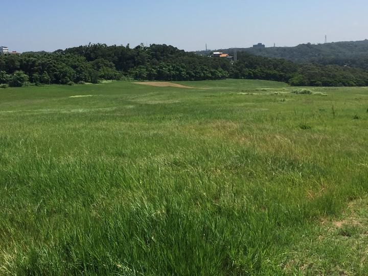 新竹市香山青青草原有大片草原、步道,適合親子同行。記者李青霖/攝影