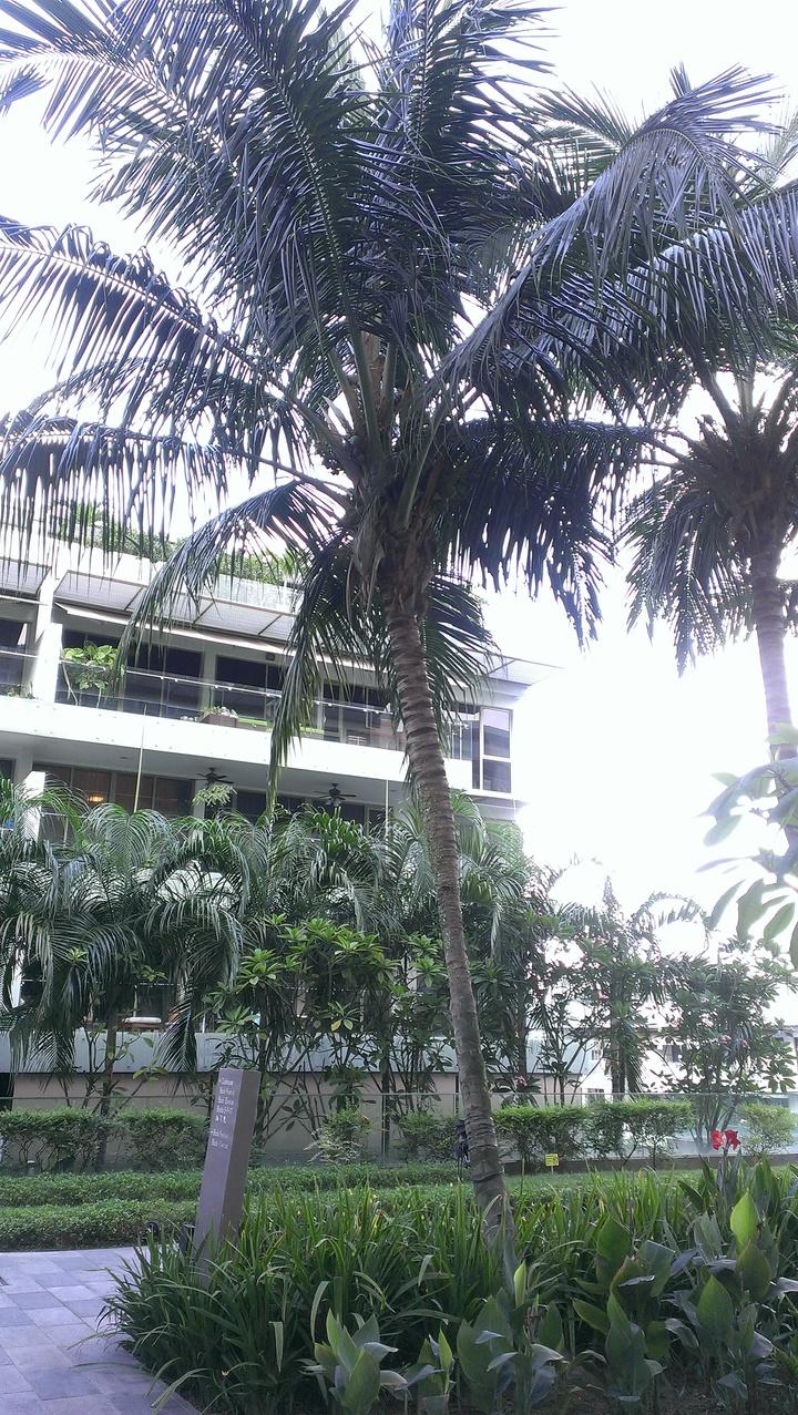 鄰國新加坡在高樓種樹抗熱,圖為位於三樓的社區花園。記者董俞佳/攝影