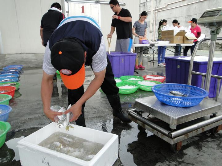 花蓮區漁會魚市場人員協助整理漁獲,準備叫賣了。記者范振和/攝影