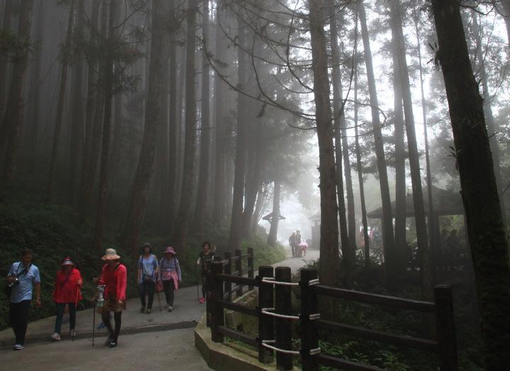 數萬公頃森林造就最豐富的森林芬多精步道。圖/杉林溪提供