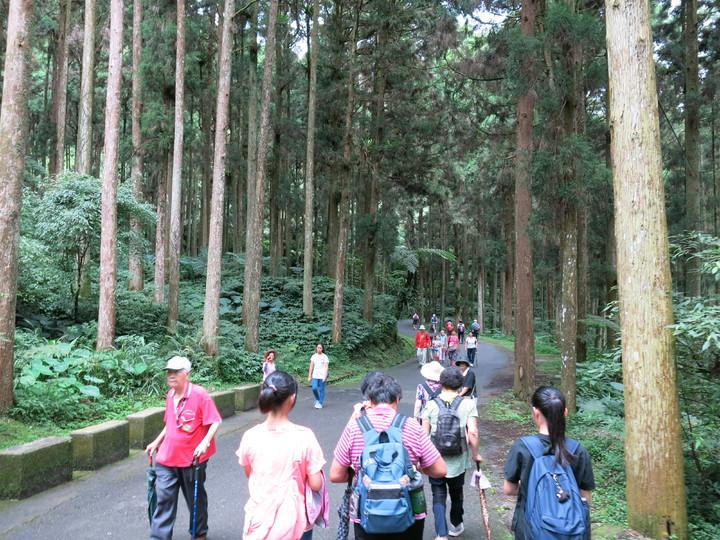 溪頭自然園區是國內65歲以上長者最愛登山健行的森林去點。記者黑中亮/攝影