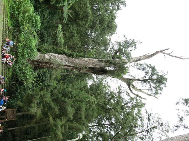 溪頭自然園區是國內65歲以上長者最愛登山健行的森林去點。記者黑中亮/攝影溪頭自然園區是國內65歲以上長者最愛登山健行的森林去點。記者黑中亮/攝影