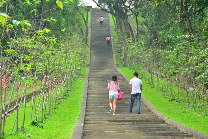 國定古蹟台南山上淨水池要先爬上近200階的步道,目前兩側均栽滿櫻花,預計明年櫻花會陸續盛開。記者吳淑玲/攝影