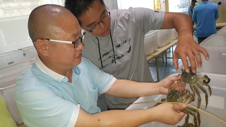 上海海洋大學教授王春(左)認為今年參賽的大閘蟹質量提升。記者胡蓬生/攝影