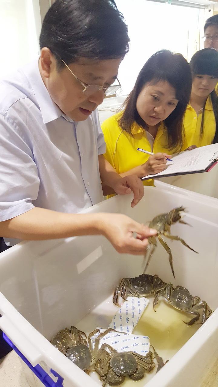 苗栗縣政府連續第5年舉辦全縣大閘蟹評鑑,由上海海洋大學學者、縣府、漁業署人員組成的評審團,上午仔細地檢視參賽的大閘蟹評分。記者胡蓬生/攝影
