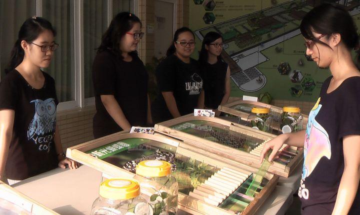 新光國小親師設計好玩的彈珠台遊戲,讓小朋友從遊戲中學習生態知識。記者徐如宜/攝影