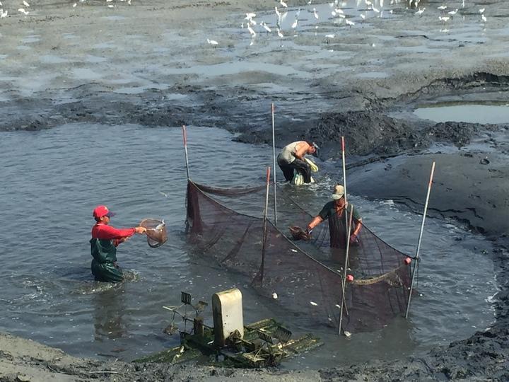 洪姓養殖漁民的1萬多尾烏魚幾全被沖走,只剩寥寥無幾的虱目魚,損失上千萬元。記者吳政修/攝影
