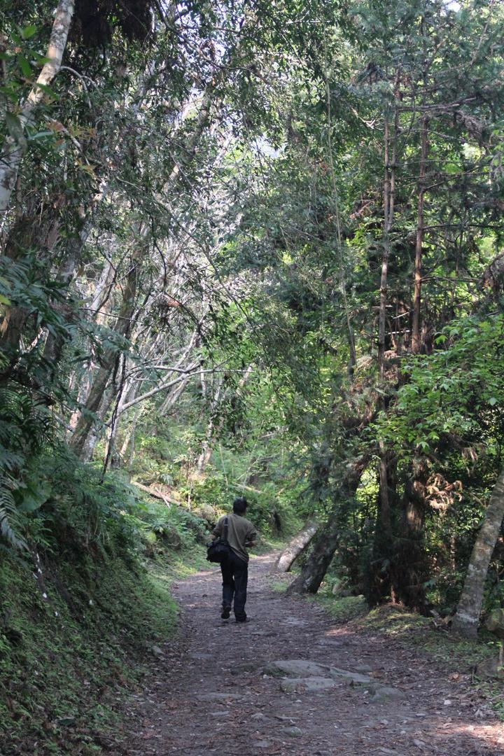 玉山國家公園管理處今宣佈颱風後受損的東部園區瓦拉米步道已修復,即日起恢復通行,步道景觀超美。本報檔案資料照