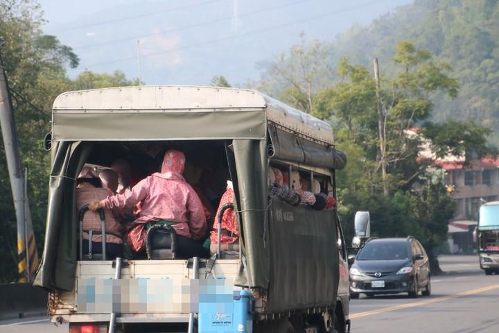 採茶班工頭開車搭載採茶婦四處採茶,超載情況讓人看得怵目驚心。記者黃宏璣/攝影