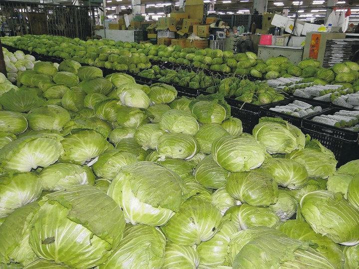 高麗菜價格崩跌,農糧署與農民合作社推出高麗菜網購。本報資料照