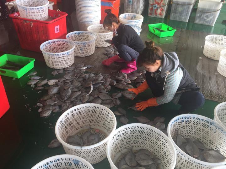 農曆春節即將到來,東石魚市場各項漁蝦價格都漲。(本報資料照片)