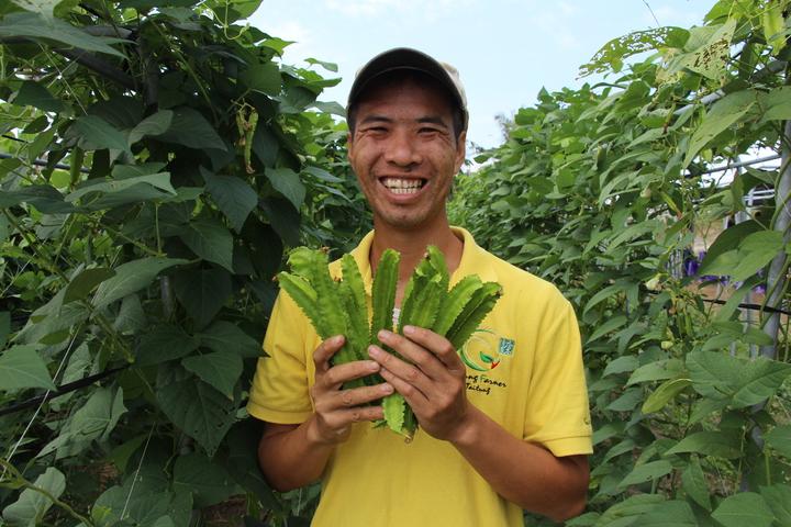 青農廖家助試種翼豆,收成以預期好,甚至受到台北飯店青睞。記者李蕙君/攝影