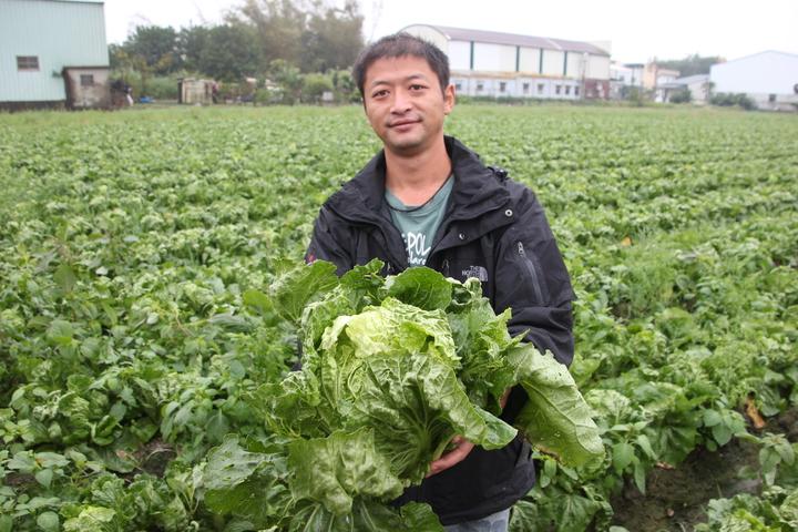 種白菜的農民黃昱翔已決定下周六日21、22日也要開放給大家採菜,一顆白菜也賣10元。記者林宛諭/攝影
