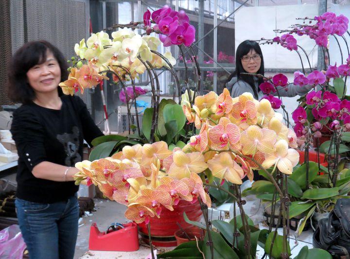 台糖花藝高手為訂花送禮民眾組合盆花。記者周宗禎/攝影