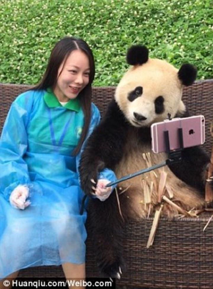 熊貓把手搭在遊客手上,乍看之下宛如牠「拿著」自拍棒與遊客自拍。(圖/英國每日郵報)