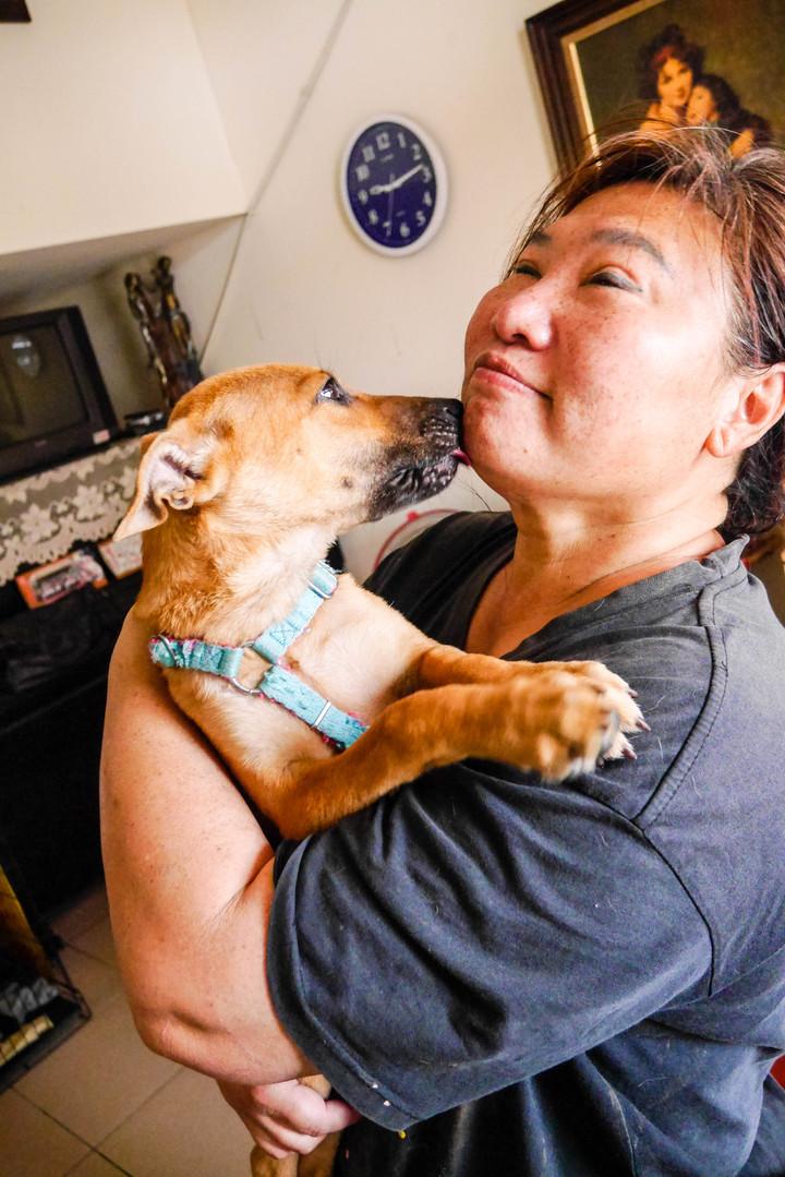 動保志工徐滿惠上個月從屠宰場救出5個月大的「土豆」,原本看見人就發抖害怕的牠,現在已相當親人,近期將替牠辦送養。記者鄭維真/攝影