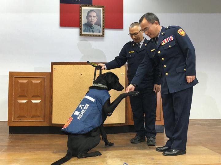 宣導反詐騙有功的榮譽警犬「王小胖」今天正式升官,由玉里警分局長鍾德勳授階。記者陳麗婷/攝影