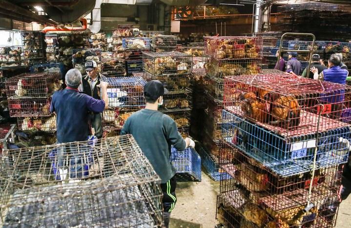 雞籠擠滿了整個家禽市場。記者鄭清元/攝影
