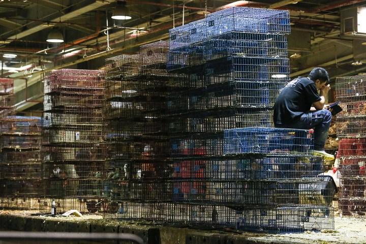 有雞販暫時坐在雞籠上休息。記者鄭清元/攝影